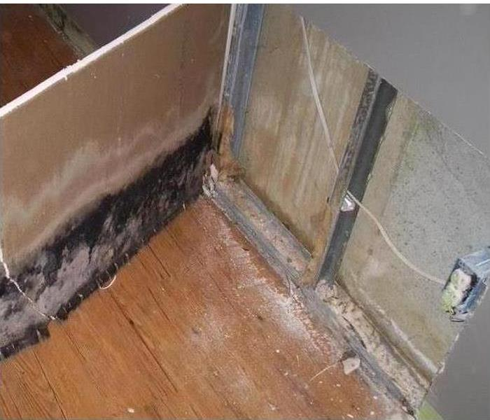 Mold Remediation in Swampscott Apartment  Before