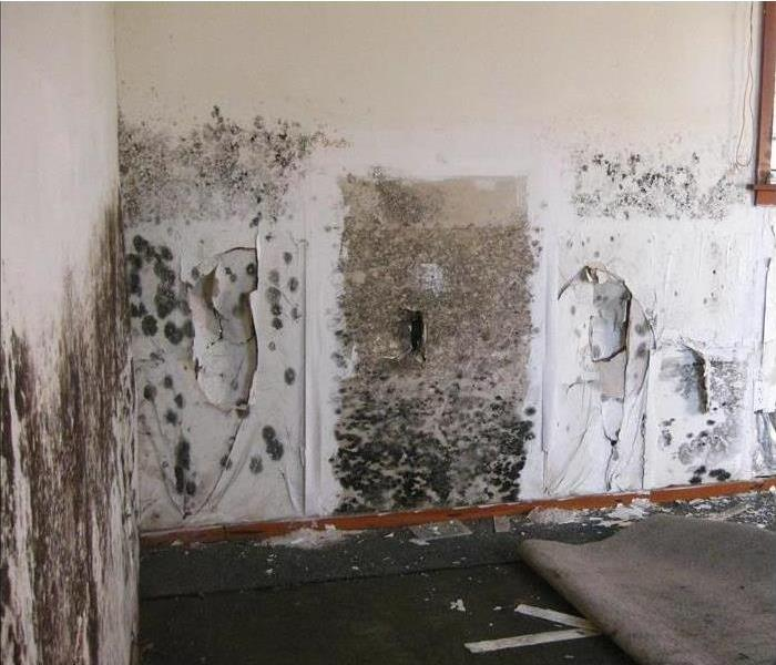 Mold in Marblehead Home