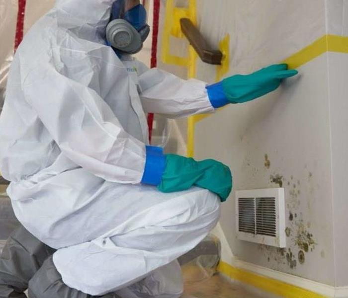 Mold Remediation Commercial Mold Remediation in Essex County